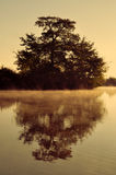 Tree by the Water Royalty Free Stock Image