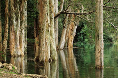 Tree in water Royalty Free Stock Images