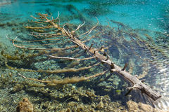 Tree in the water Stock Photos