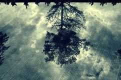 Tree in the water. At carpark after raining.the tree picture seen on the floor Royalty Free Stock Images