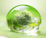 Tree in water drop Stock Photography