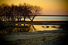 Tree and water landscape Royalty Free Stock Images