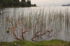 Tree in water. Native tree underwater in Lakeside stock photo
