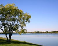 Tree at Water's Edge. Tree at Edge of Lake, Blue Sky stock photography