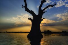 Tree in water at Sunset in Mandalay, Myanmar Stock Image