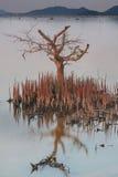 Tree on water Stock Photos
