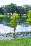 Tree in water Royalty Free Stock Photography