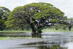 Tree and water Stock Photography