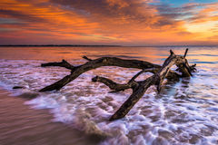 Tree and waves in the Atlantic Ocean at sunrise at Driftwood Bea Stock Photos
