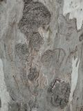 Tree  wavy texture in the forest, textured background wallpaper. Stock Photography