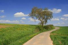 Tree and way Royalty Free Stock Image