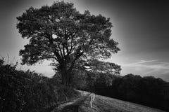 Twilight, tree and way in the dark Stock Photos