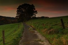 Twilight, hiking trail and tree stock photos