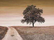 Tree at a way Royalty Free Stock Image