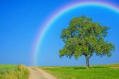Tree on a way with a rainbow Stock Photos
