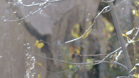 Tree in a web close-up. Tree in a web on a background of a ruined wall close-up stock footage