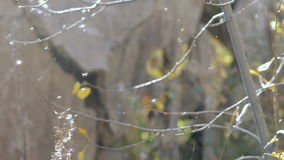 Tree in a web close-up stock footage