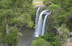A tree and Whangarei Falls Stock Image