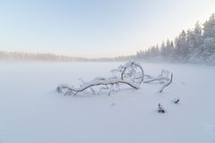 The tree which has fallen and frozen in winter lake Stock Photography