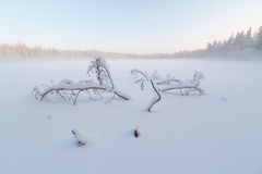 The tree which has fallen and frozen in winter lake Stock Photo