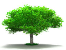 Tree on a white Stock Photography