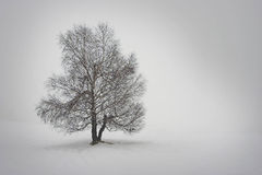 Tree in white. Lonely tree in snowy white land Stock Photo