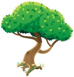 Tree On White Royalty Free Stock Photography