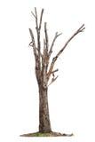 Tree on white background Stock Photos