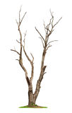 Tree on white background Royalty Free Stock Photography