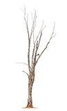 Tree on white background Stock Image