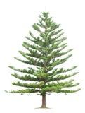 Tree on white background Royalty Free Stock Photo