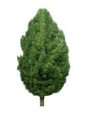 Tree 2. Royalty Free Stock Photos