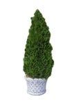Tree 4. Royalty Free Stock Photo