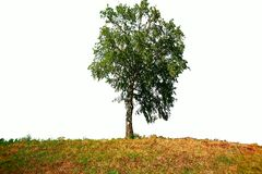 Tree on a white background. Leaf Stock Images