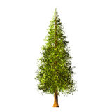 Tree  on white background Royalty Free Stock Images