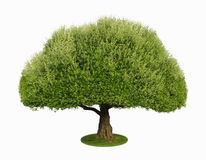 A tree with a white background no3 royalty free stock photo