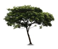 Tree with white background. Isolated royalty free stock photo