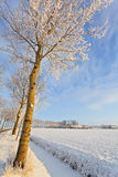 Tree in a white cold winter landscape Royalty Free Stock Photos