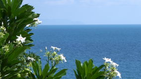Tree with White Flowers, Sea View Background stock video footage