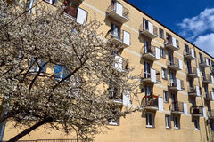 Tree with white flowers in the spring against the facade of a modern residential building Stock Images