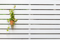 Tree on white lath wall Royalty Free Stock Image