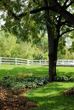 Tree with White Picket Fence Royalty Free Stock Photos