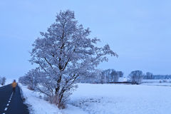 Tree in a white winter landscape Royalty Free Stock Photography