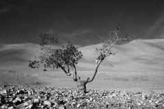 Tree in wild Stock Images