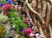 Tree and wild flowers. Tree roots and trunk with wild flowers Royalty Free Stock Image