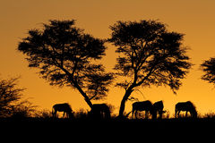 Tree and wildebeest silhouette Stock Images