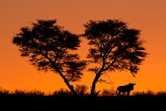 Tree and wildebeest silhouette Royalty Free Stock Photo