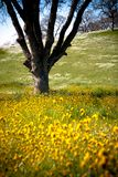 Tree in wildflowers Royalty Free Stock Photo