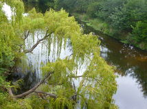 Tree. Willow seen from above posing on the river Los Molinos, in the province of Cordoba, Argentina Stock Photography