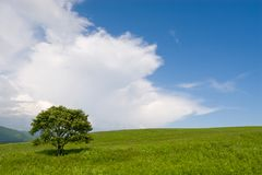 Tree and wind Royalty Free Stock Photos